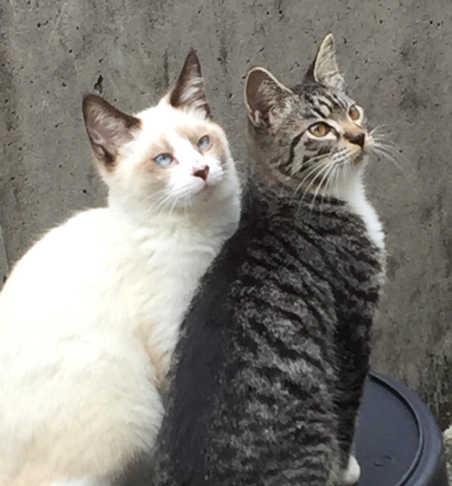 庭に遊びに来る猫達。二匹でくっついて座っている。2017年撮影。